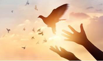 Soñamos con la paz